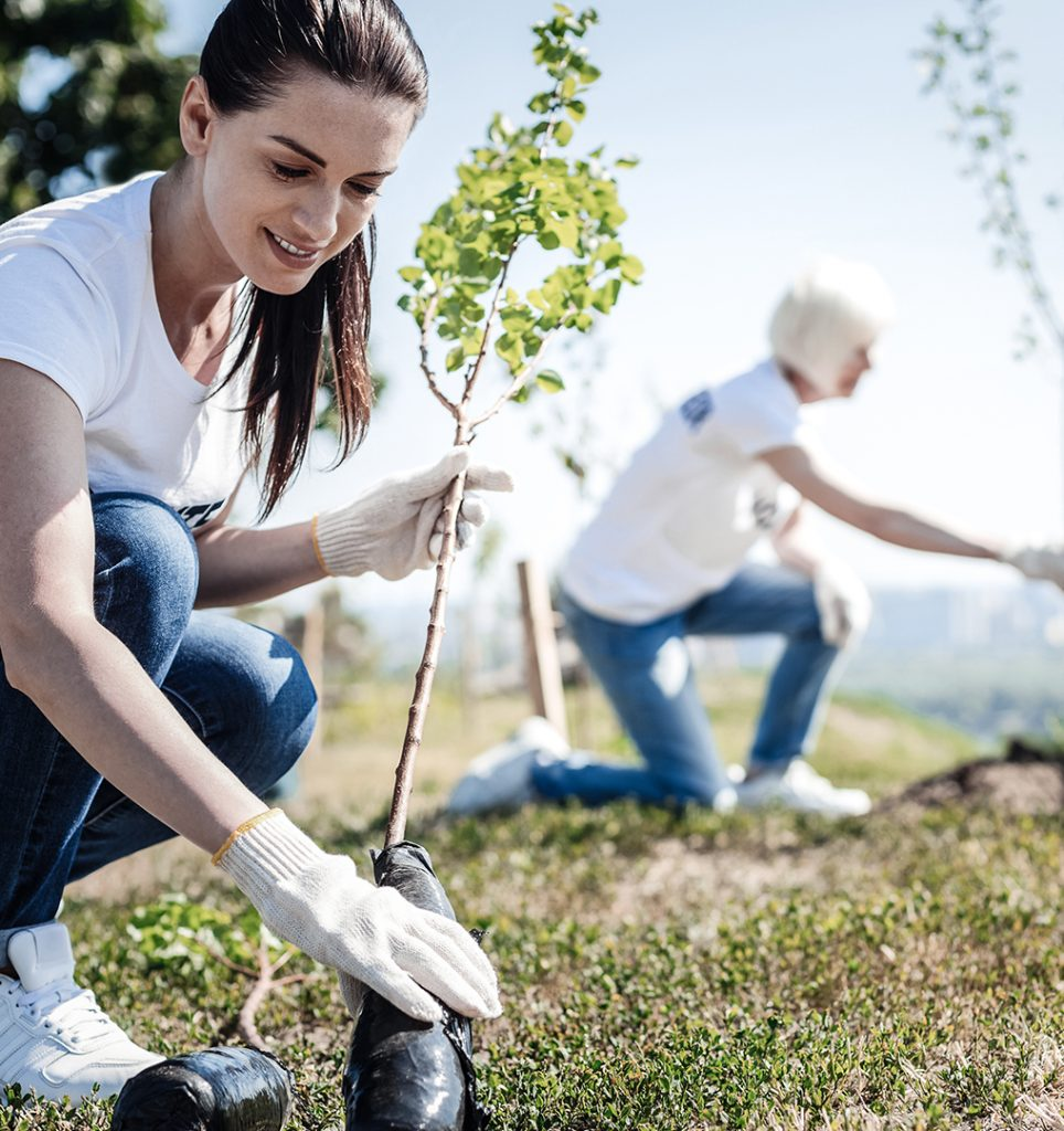 One Tree Planted Environmental Sustainability